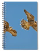 Peregrine Siblings Chasing Each Other Spiral Notebook