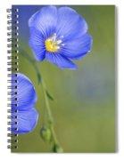 Perennial Flax Flowers Spiral Notebook