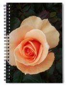 Perfect Peach Rose Spiral Notebook
