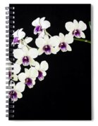 Perfect Phalaenopsis Orchid Poster Spiral Notebook