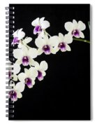 Perfect Phalaenopsis Orchid Spiral Notebook