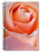 Perfection In A Peach Rose Spiral Notebook