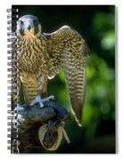 Perigrine Falcon Spiral Notebook