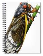 Periodical Cicada Spiral Notebook