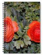 Persian Buttercups Spiral Notebook