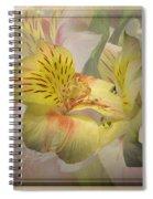 Peruvian Lily Framed Spiral Notebook