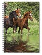 Peruvian Paso Reflections Spiral Notebook