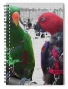Pet Parrots In A Cafe Spiral Notebook