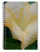 Petal Pillows By Jrr Spiral Notebook
