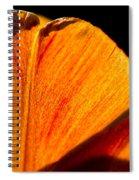 Petals And Sun Spiral Notebook
