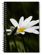 Petals Of White Spiral Notebook