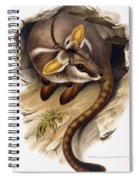 Petrogale Xanthopus      Ch 991244 Spiral Notebook