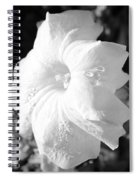 Petunia After Rain Spiral Notebook