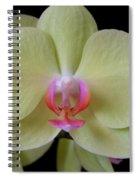 Phalaenopsis Fuller's Sunset Orchid No 2 Spiral Notebook