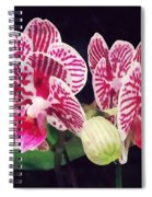Phalaenopsis Orchid Taida Little Zebra  Spiral Notebook