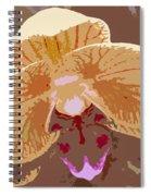 Phalaenopsis Synopsis Spiral Notebook