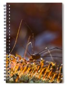 Phalangid Among The Moss Capsules Spiral Notebook