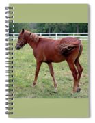 Philly Spiral Notebook