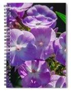 Phlox 7128 Spiral Notebook