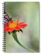 Piano Wings Butterfly Spiral Notebook