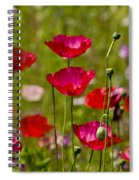 Picture Perfect Poppies Spiral Notebook