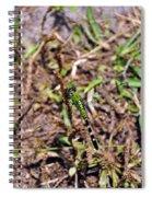 Picturesque Pondhawk Spiral Notebook