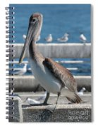 Pier Brown Pelican Spiral Notebook