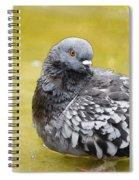 Pigeon Bath Spiral Notebook