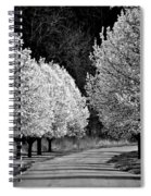 Pigeon Mountain Dogwoods In Black And White Spiral Notebook