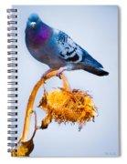 Pigeon On Sunflower Spiral Notebook