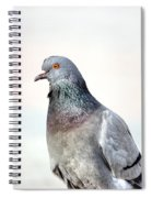 Pigeon Portrait Spiral Notebook