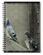 Pigeons In Damask Spiral Notebook