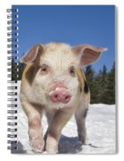 Piglet Walking In The Snow Spiral Notebook