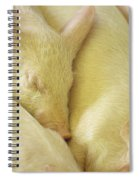 Pigs Sleeping Spiral Notebook