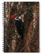 Pileated In Winter Spiral Notebook