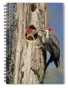 Pileated Woodpecker And Chick Spiral Notebook