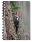 Pileated Woodpecker Foraging Spiral Notebook