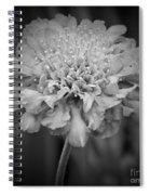 Pincushion Bw Spiral Notebook