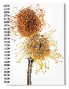 Pincushion Protea Spiral Notebook