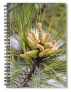 Pine Catkins Spiral Notebook