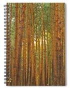 Pine Forest Lienewitz Germany Spiral Notebook