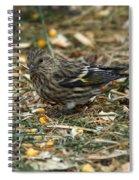 Pine Sikin Spiral Notebook