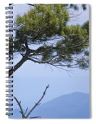 Pine Tree Along The Blue Ridge Parkway Spiral Notebook