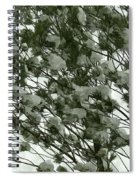 Pine Tree Branches Covered With Snow Spiral Notebook