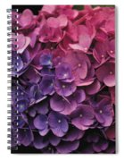 Pink And Blue Hydrangea Spiral Notebook