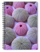 Pink And Green Urchins Spiral Notebook