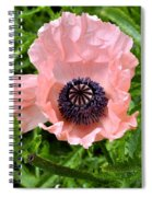 Pink And Purple Poppy Spiral Notebook