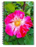 Pink And Red Striped Rose Spiral Notebook