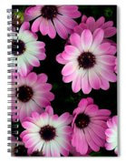 Pink And White Daisies Spiral Notebook