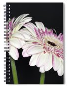 Pink And White Gerbera 2 Spiral Notebook